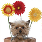 Dog in a flower pot